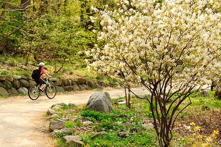 A bicycle pedestrian pedals along the Howard Temin Lakeshore Path at the University of Wisconsin-Madison during spring on May 10, 2011. The area is part of UW-Madison's Lakeshore Nature Preserve. (Photo by Bryce Richter / UW-Madison)