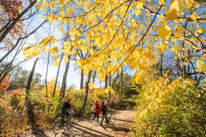 The Lakeshore Path in fall with students biking down the dirt path